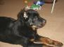 [:cs]Baron štěně [:en]Baron puppy