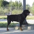 Baron-LVT-Zbraslav-2007-01