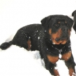 Clyde-Naughty-Rotty-1-2013