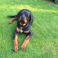 ClydeNaughty-Rotty-6mesicu