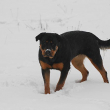 Connie-Naughty-Rotty-05