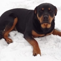 Connie-Naughty-Rotty-04