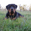 Cyser-Naughty-Rotty-02