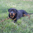 Cyser-Naughty-Rotty-03