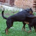 Baron-Orso-dovolena-Slovensko-2009-05