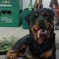 Orso-cervenec-2012_03