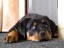 [:cs]Orso štěně [:en]Orso puppy