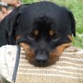Orso-Pohorelice-2009-05