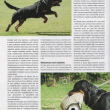 clanek-rtw-Psi-sporty-06-2013-str3